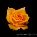 Photos: Rose-3584
