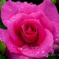 Photos: Rose-3612