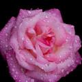 Photos: Rose-3689