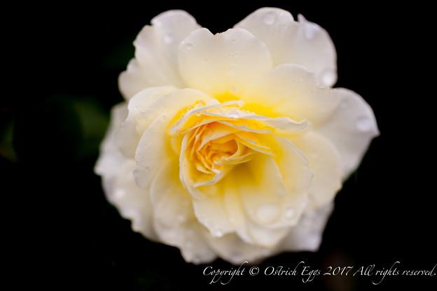 Photos: Rose-3748