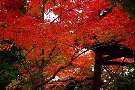 赤く燃える・近所の寺