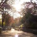 【秋】静かな歩道 新横浜[2014]