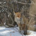 Photos: Fox's look