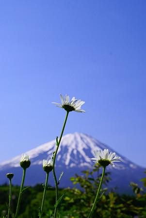 富士より高く?^^;