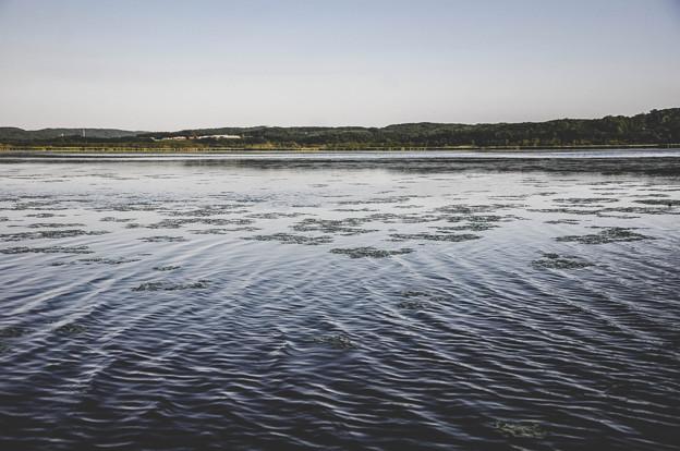 写真: 釧路濕原