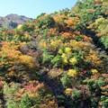 梅の木轟公園