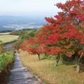 日本一の枕木階段 b