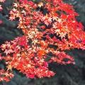 写真: 紅葉 a