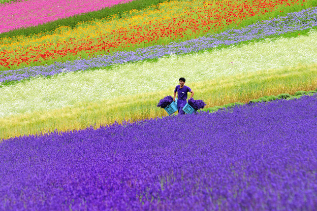 写真: Picking flowers