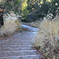 写真: 091206-14高尾山~陣馬山縦走・一丁平への下り