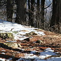 写真: 100116-41大岳山・馬頭刈尾根 このコはだあれ?