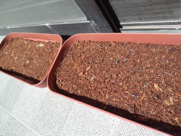 朝顔とコスモスも植えてみた。