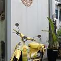 写真: 黄色いCub