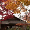 昭和記念公園 日本庭園 紅葉3