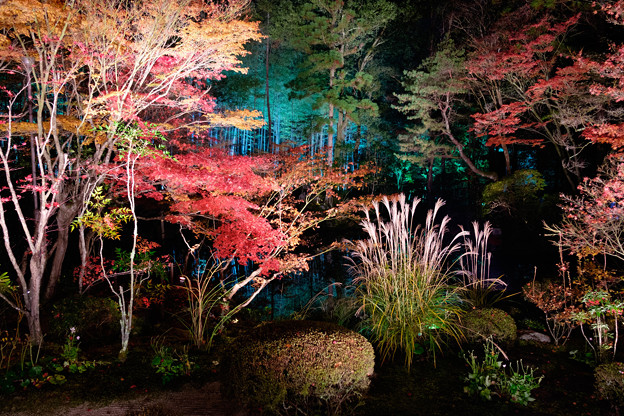 写真: 南禅寺ライトアップ