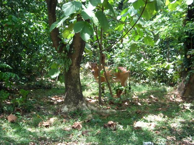 ジャングルに動物が・・・。