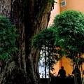 写真: 街角・大樹の下で昼休み。