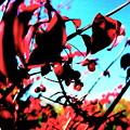 コマユミの紅葉と実