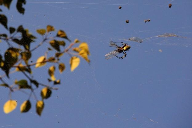 蜘蛛の巣_14927b