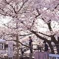 写真: 暖かい春