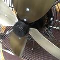 Photos: レトロ風扇風機