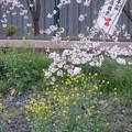 2017海老川ジョギングロードDSC03993