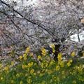 2017海老川ジョギングロードDSC04002