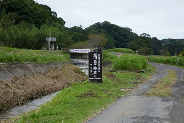 武田川コスモス・菜の花ロード@木更津P1000350