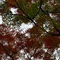 Photos: 大平山@栃木市P1010611