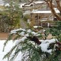 写真: snow