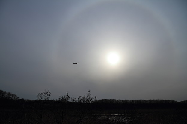 西に傾いた太陽に日暈、明日は雨かな