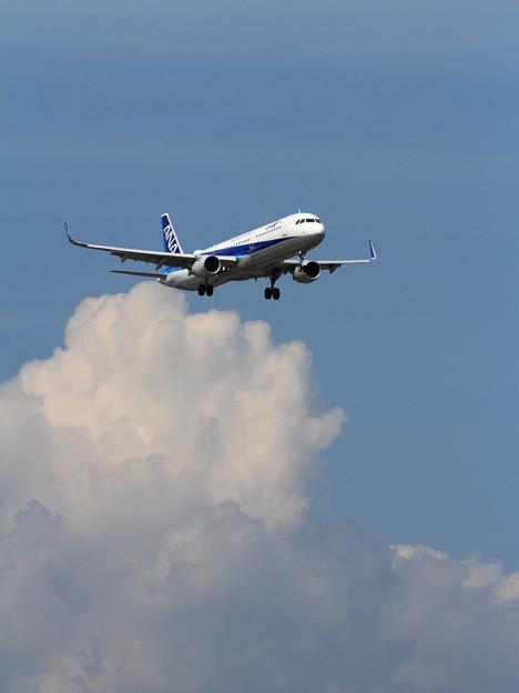 A321ceo ANA と夏空