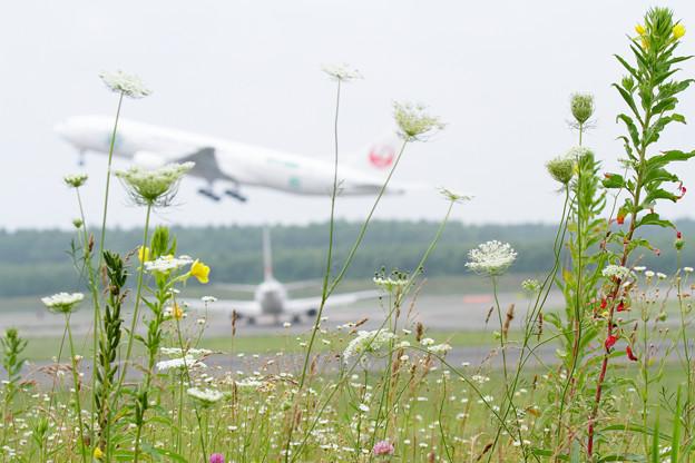 写真: Airfield (2)