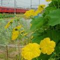 近鉄大阪線 鮮魚列車