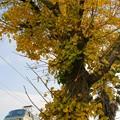 Photos: 配1392レ【EF66 111】