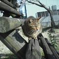 写真: 2012_04010051