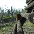 写真: 2012_04010054