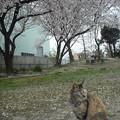 写真: 2012_04050068