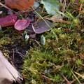 水仙の芽♪