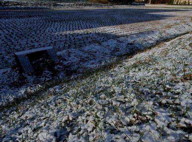 初雪景色♪