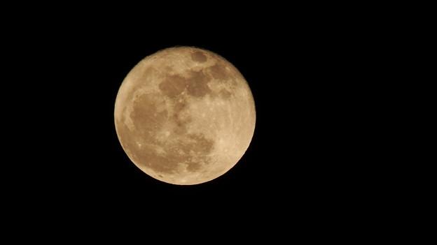 写真: 満月