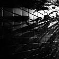 写真: レンガタイルの壁