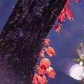 2017 金鱗湖の紅葉4