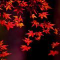 2017 金鱗湖の紅葉8