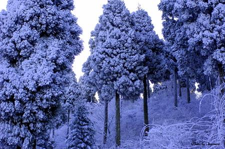 阿蘇の樹氷