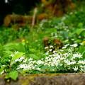 斜面も花盛り