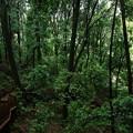 シラカシ林の中