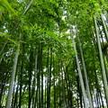 竹林もあり