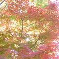 Photos: 木場公園の紅葉