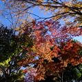 木場公園の紅葉 2
